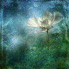 Experimental Garden Cosmos II by Carina514