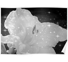 Diamond Lily © Poster