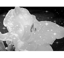 Diamond Lily © Photographic Print