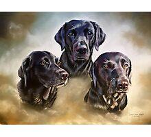 Three companions Photographic Print