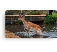 Deer in water Canvas Print