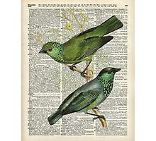 Green Canary Brds Over Vintage Book Page Photographic Print