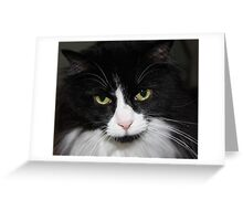 Black and White Tuxedo Cat Greeting Card