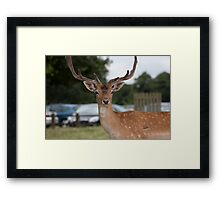 Did someone say Bambi? Framed Print