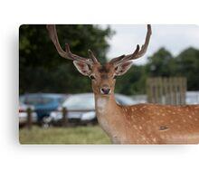 Did someone say Bambi? Canvas Print