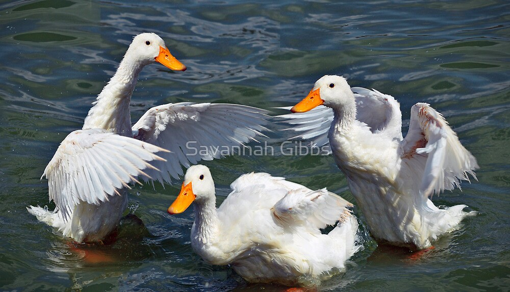 White Ducks by Savannah Gibbs