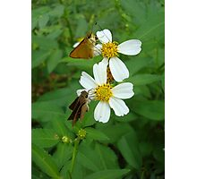 Two little skippers, sip, sip. Photographic Print