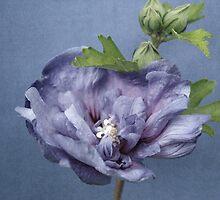 shades of blue by Iris Lehnhardt