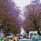 Greece. Athens. Busy street of Jacaranda trees. by vadim19