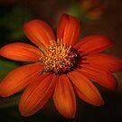 Textured Petals by Deborah  Benoit