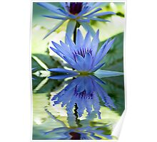 Lily Reflections Poster