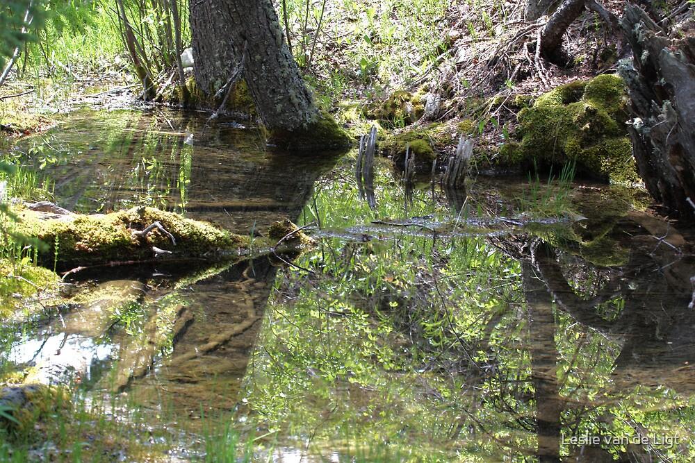Reflections In A Forest Pond by Leslie van de Ligt
