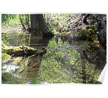 Reflections In A Forest Pond Poster