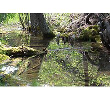 Reflections In A Forest Pond Photographic Print