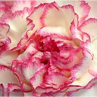 Rose Tipped Petals by Kathy Bucari