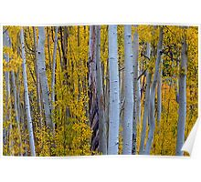 Beautiful Fall Forest Poster