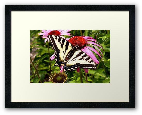 Butterfly by Valerie Henry