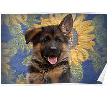 Drigon - German Shepherd Puppy Poster