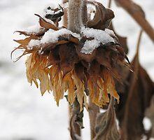 Sad Sunflower by Kathi Arnell