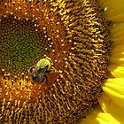Make-A-Wish Bee by Debbie Robbins