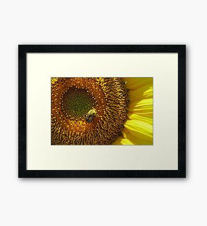 Make-A-Wish Bee Framed Print