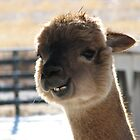 Smiling Alpaca by Kathi Arnell