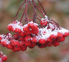 First Snowfall by Kathi Arnell