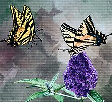 Two Butterflies Are Better Than One by Diane Schuster