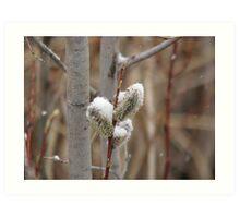 Snowy Willows Art Print