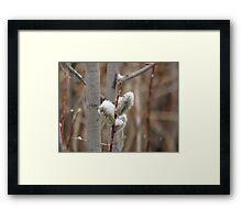 Snowy Willows Framed Print