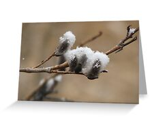Snow on the Willows Greeting Card