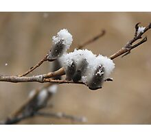 Snow on the Willows Photographic Print