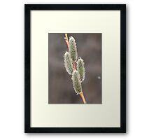 Almost Blooming Framed Print