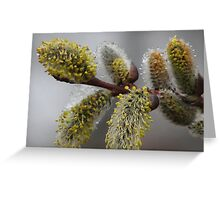 Blooming Willows Greeting Card
