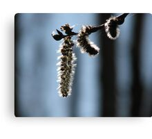 Silver Catkins Canvas Print