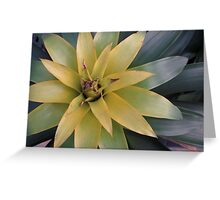 Green Bloom Greeting Card