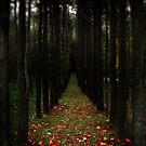 Autumn Path by Rowan Kempf