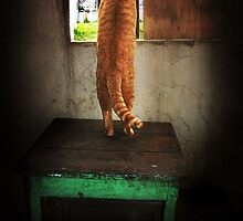 Cat In Window by Maria  Gonzalez
