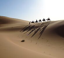 Camels on the Dunes by DriftWords
