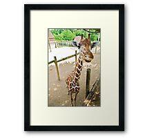 Who said giraffes can't smile? Framed Print