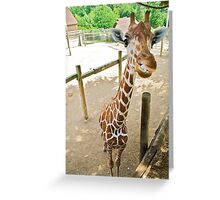 Who said giraffes can't smile? Greeting Card