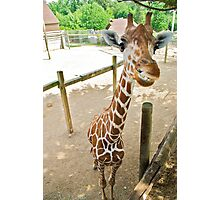 Who said giraffes can't smile? Photographic Print