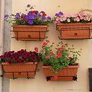 Beautiful Baskets by joycee