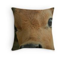 Darling Jersey bull calf.... Throw Pillow