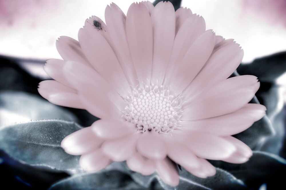 Delightful flower with a little bug... by Wenz