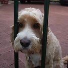 A Neighbour's Dog by joycee