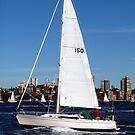 Sailing on Sydney Harbour by Michael John
