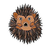 Funky Artistic Baby Porcupine Photographic Print