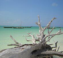 Zanzibar Driftwood by KelShel