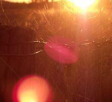 Warm Winter's Sunset by Adelheid